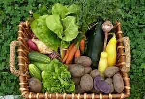 suplementos alimentares beneficios e maleficios
