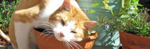 Gatos são normalmente loucos por plantas