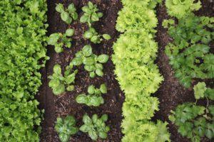 Escolha os mais fáceis de cultivar primeiro.
