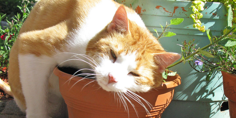 8 plantas seguras para gatos cultivando Plantas seguras para gatos