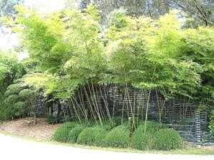 20 Plantas Ornamentais - Etapa 7 3