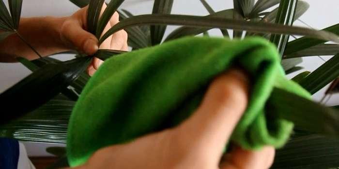 Como limpar folhas de plantas de interior?