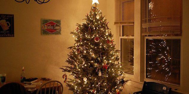 Como cuidar de um pinheiro de Natal vivo?