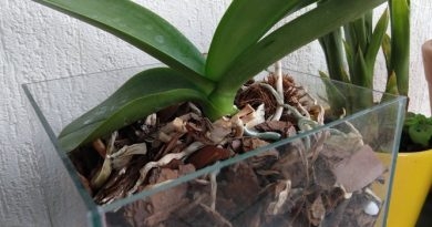 Posso plantar em vasos sem furos de drenagem?